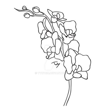 Orchid Quick Draw - Black and White by tyrynn