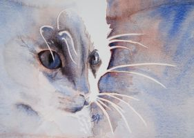 Whiskers by telynBach