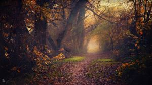 Make Believe by ildiko-neer