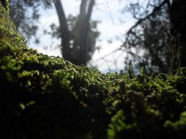 moss on tree 2 by ZedLord-Art