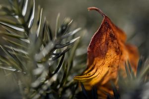 Autumn in our garden 3 by MarkyF