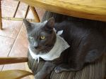Can I has Dryer Sheet Scarf by Arborpunk
