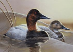 Canvasbacks by Misted-Dream