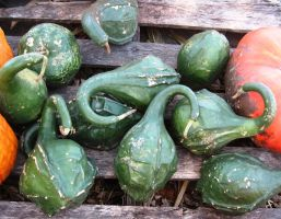Green Gourds by justamom