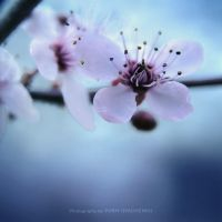 Spring in a square 01 by dizzi-bizzi