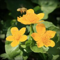 Wanna bee by blessedchild
