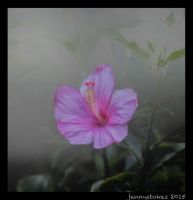 Hibiscus fog. by jennystokes