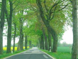 tunnel of trees by AlenaKrause