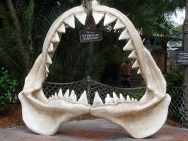 Jaw 2 Front View TyphoonLagoon by WDWParksGal-Stock
