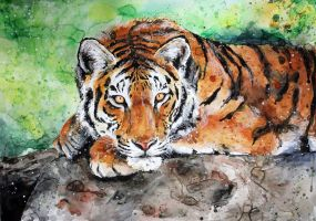 tiger by ElenaShved