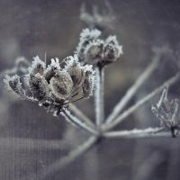 winter love by JoannaRzeznikowska