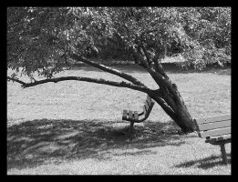 Even Trees Get Tired by picworth1000wrds