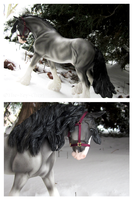 Breyer - Saltire In The Snow by The-Toy-Chest