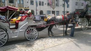 Carriages at NY city by my-kawaii-town