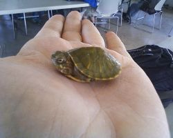 Turtles 1 by Booklover198273
