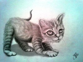 A little cat by lvito00