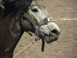 Bronc Close Up by IcejCat