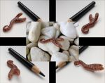 polymer clay two headed California Glossy Snake by Moviedraws