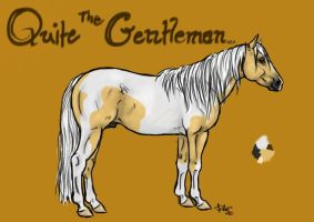 Quite The Gentleman Ref by WolfCreekStable