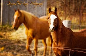 Gorgeous Horses by TearsofEndearment