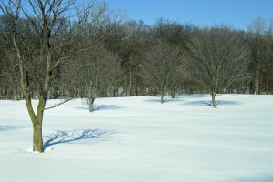 619 - snow trees by WolfC-Stock