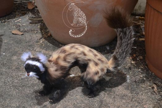 Marbled Polecat 2 by Moon-Leopard-Designs