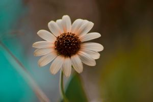 The Exotic Weed by photo67