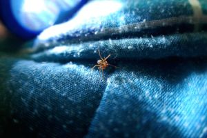 Spider on my bed by bucaralook