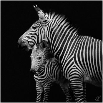 Big stripes, Little stripes by TamarViewStudio