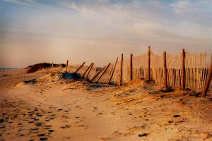Assateague III by touch-the-flame