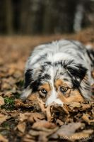 curious by aussiefoto