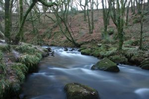 Golitha Falls by jm2003uk