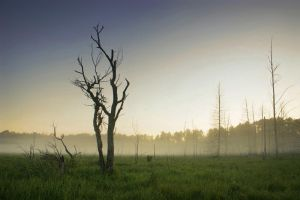 Dawn in the Deadwoods by tfavretto