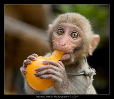 Baby Monkey eating by shamsa95