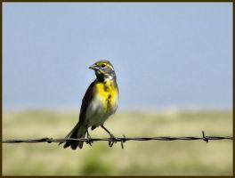 Prairie Songbird by SuicideBySafetyPin