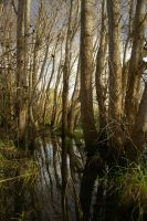 The Copse 3 by FallowpenStock