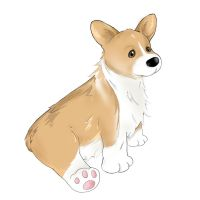 Corgi Drawing by Kaeldri
