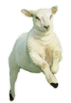 Little Leaping Lamb by SolStock