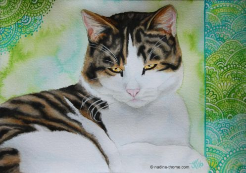 Cat Portrait II by NadineThome