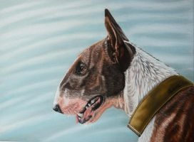 bull terrier by Vitadog