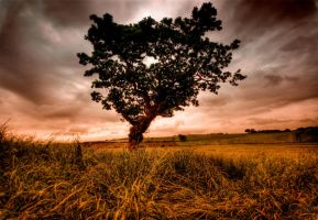 one tree hill II by theoden06