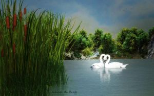 Amongst the Reeds by Dani3D
