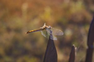 Dragonfly by Fillmory