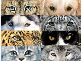 Animal Eyes by ArtsandDogs