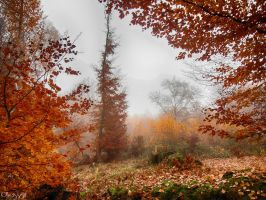 misty autumn by Weissglut