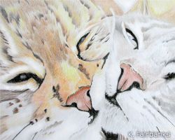Two Cats (pencil drawing) by eyeqandy