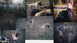 Puppies Collage by PicktreeBrag