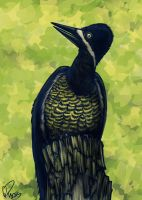 Powerful Woodpecker by twapa