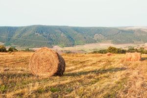 Countryside landscape by marialivia16