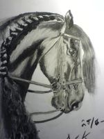 horse by arianah